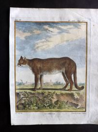 Buffon First Edition C1770 Antique Hand Col Print. Cougar 9-19